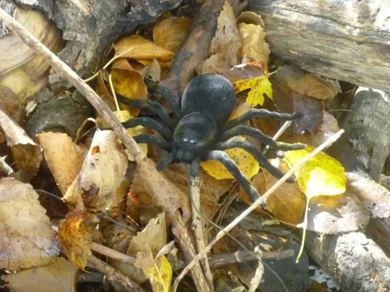 Black Spider Geocache Container