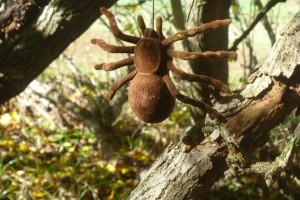 Large Brown Spider Cache