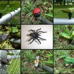 Bug Geocaching Containers