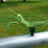 Praying Mantis Geocache Container