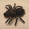 Spider Geocache Container
