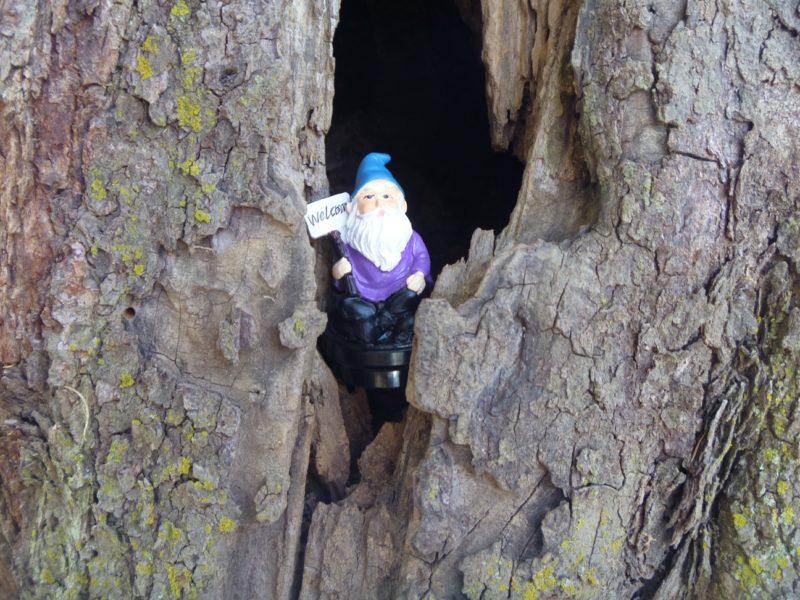 Gnome Geocache Purple Welcome