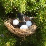 Bird Nest Geocache In Evergreen