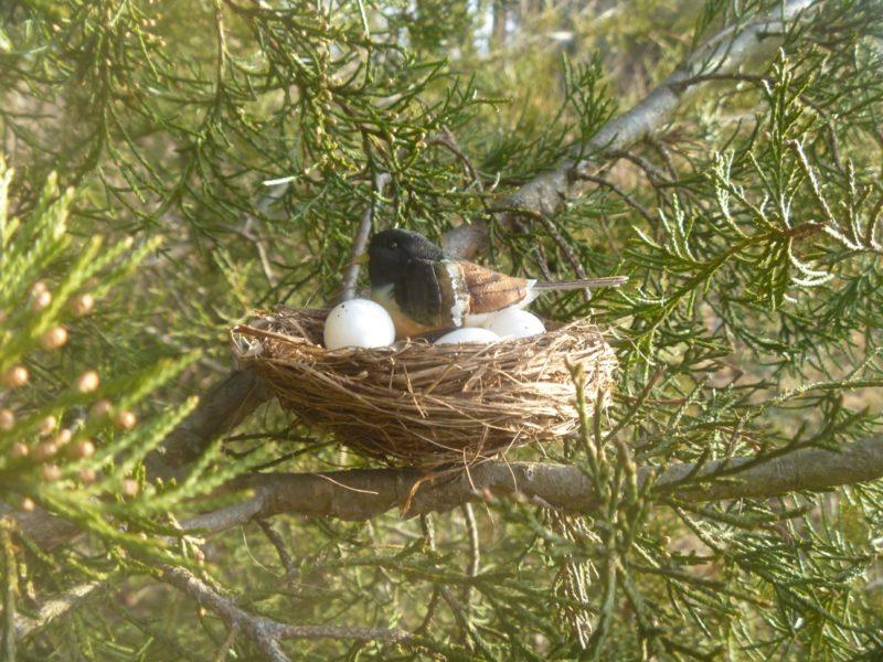 Up A Tree Cache Container Variety Pack   Geocache Hides Bird Nest With Bird